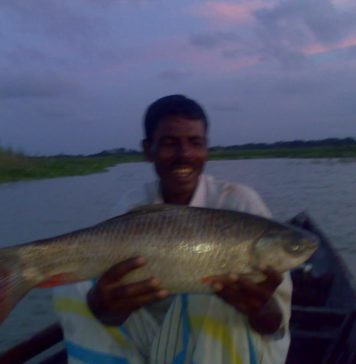 Ruhu caught from the Bangshi River