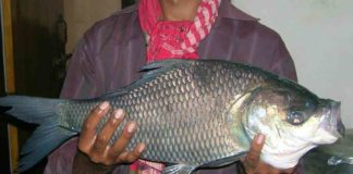 Caught From the Bangshi River