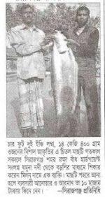 Chital Fish
